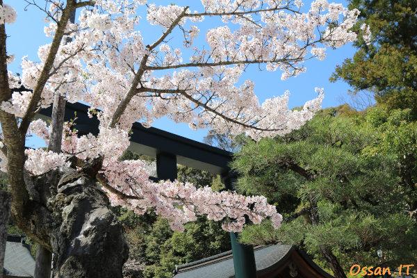 久しぶりに宝塚の清荒神へ行ってきた、清荒神清澄寺の桜、EF24-105