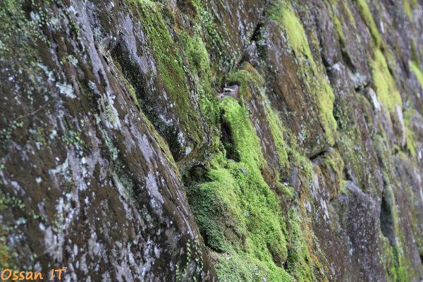 久しぶりに宝塚の清荒神へ行ってきた、清荒神清澄寺の石垣の苔、EF24-105