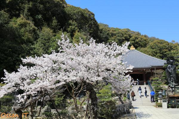 久しぶりに宝塚の清荒神へ行ってきた、清荒神清澄寺の境内の桜、EF24-105